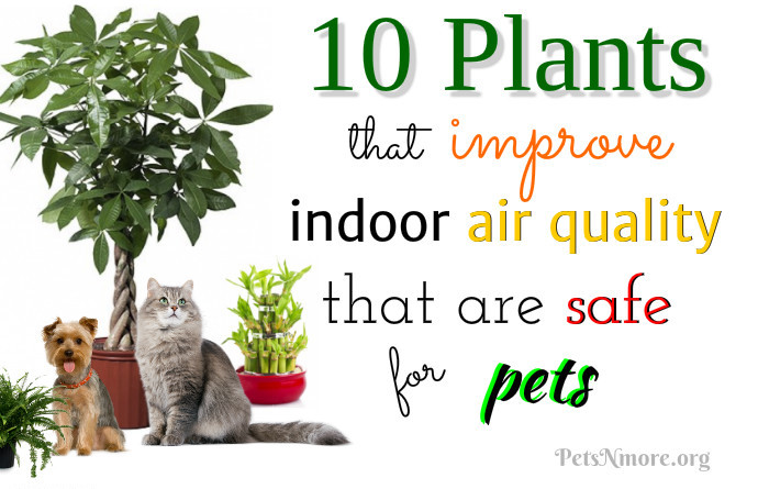 Pets n more 10 plants that improve indoor air quality for Indoor plants for better air quality