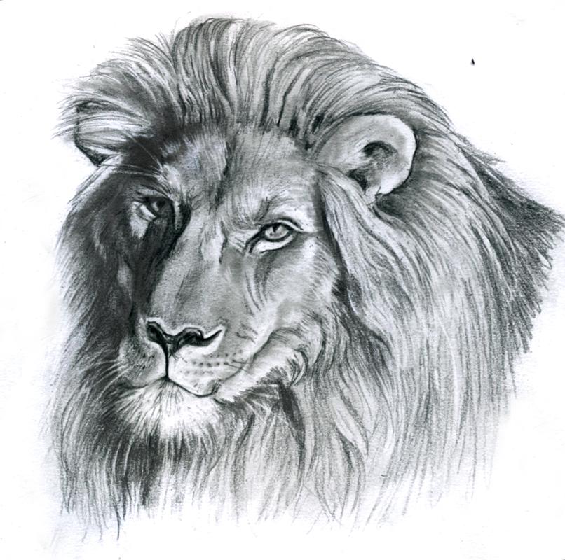 pin dessin tete de lion zimg on pinterest. Black Bedroom Furniture Sets. Home Design Ideas