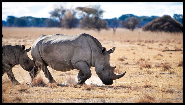 Khama Rhino Sanctuary,Botswana
