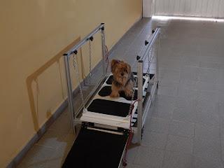 equipamentos de fisioterapia para cães