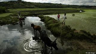 pertanian di Madagasikar yang mirip dengan indonesia