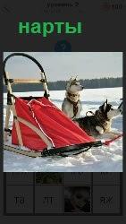 на снегу стоят нарты и упряжка с собаками готовыми бежать