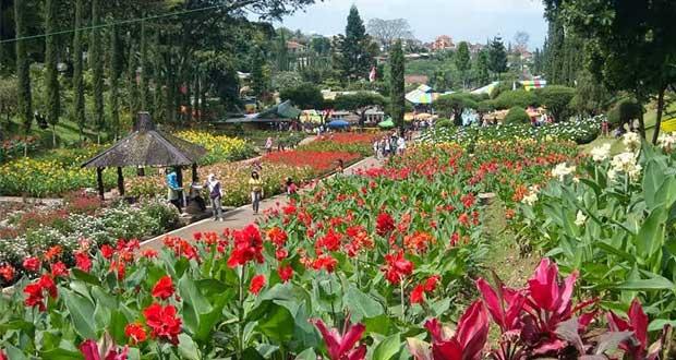 Kebun Bunga Cihideung (Foto : eleva.co)