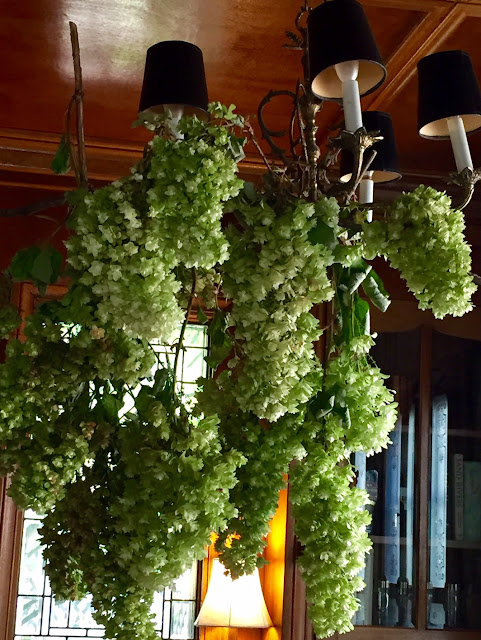 Indoor chandelier of draping Oak Leaf Hydrangea blooms.