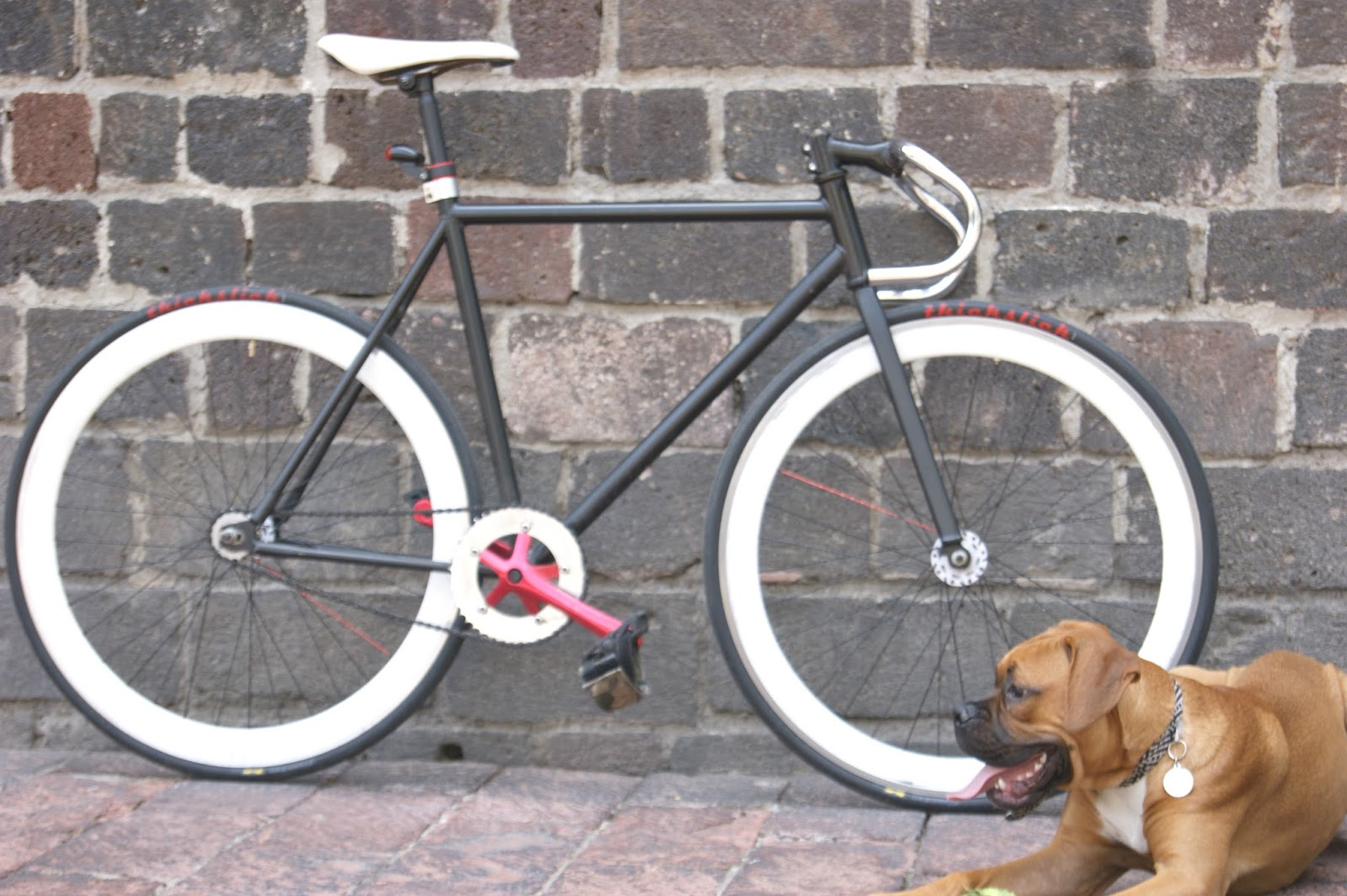 fixed bike boxer dog