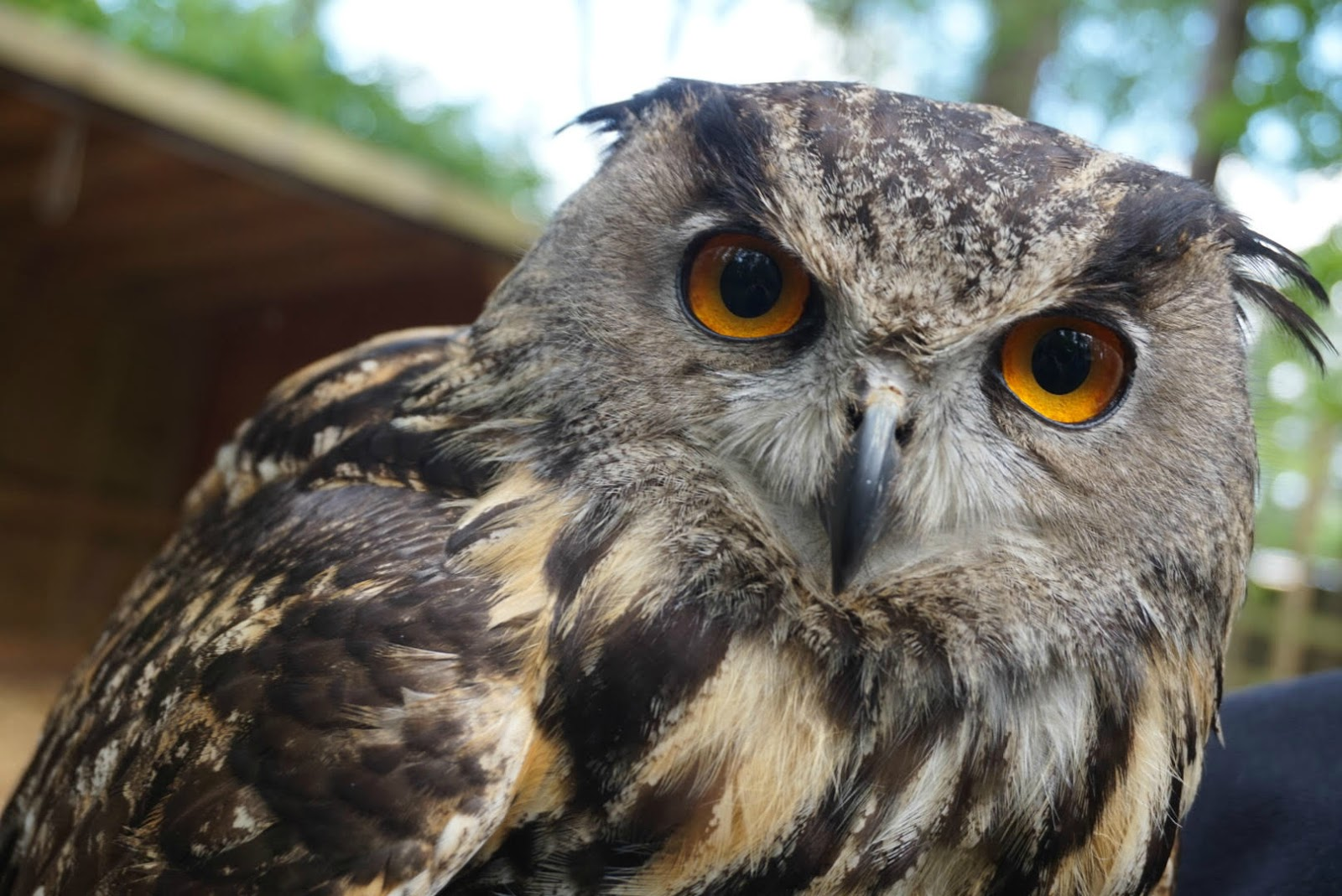 Why do some of us become owls, and others - larks 56