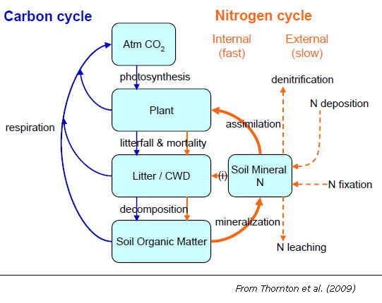 nitrogen carbon and water cycle relationship