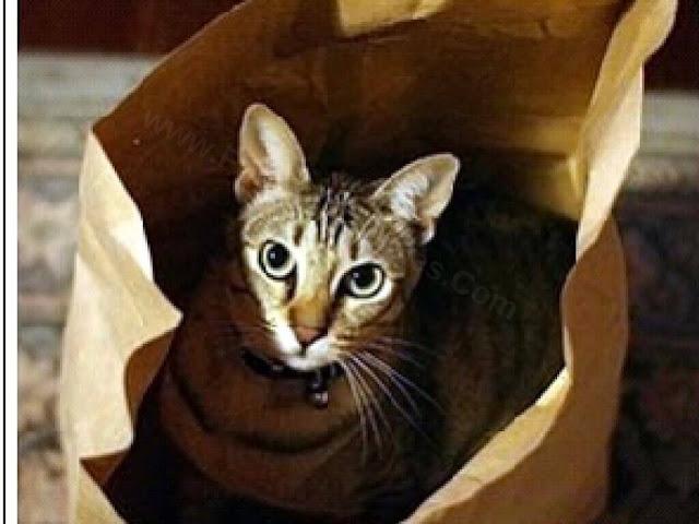 Rebus English Idiom Quiz-Cat
