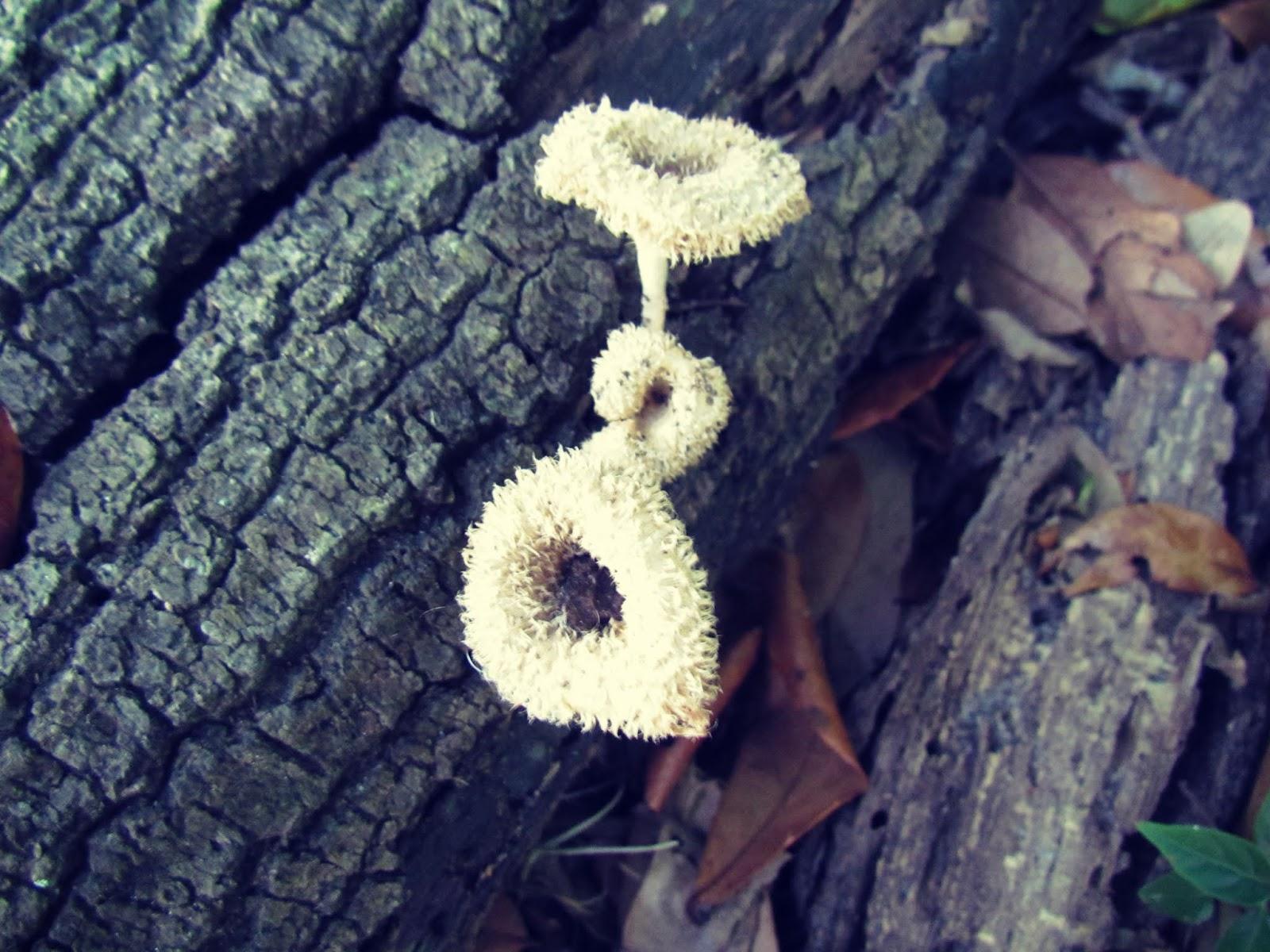 Tree Bark With Mushrooms