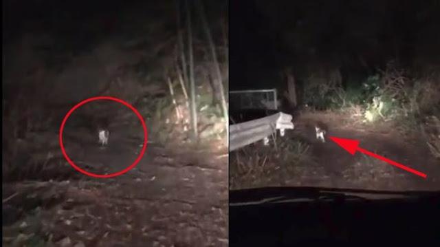 Wow! Pria Tersesat di Hutan Saat Malam Hari, Makhluk Tak Terduga Muncul Tunjukkan Jalan Keluar!