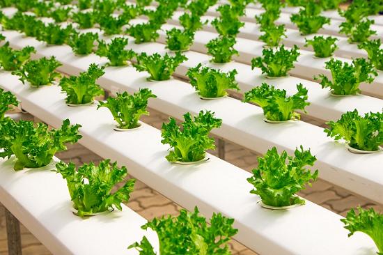 Pengertian dan Penjelasan Serta Jenis Metode tanaman Hidroponik