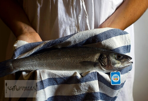 lubina-marinera-nuestros-mares2
