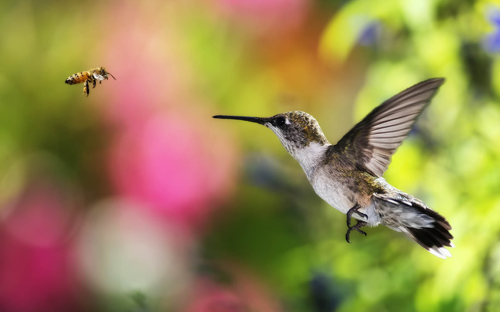 free 3d wallpapers download hummingbird wallpapers