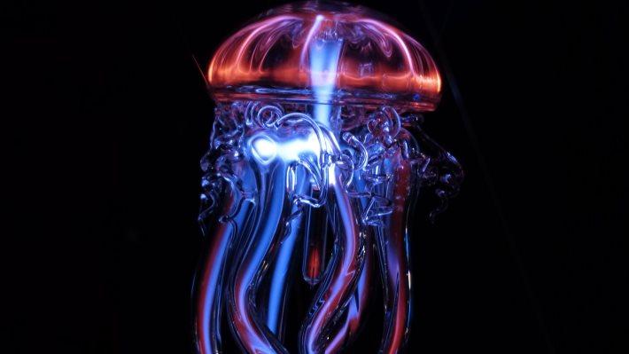 Wallpaper: Jellyfish Cold Light Phenomenon