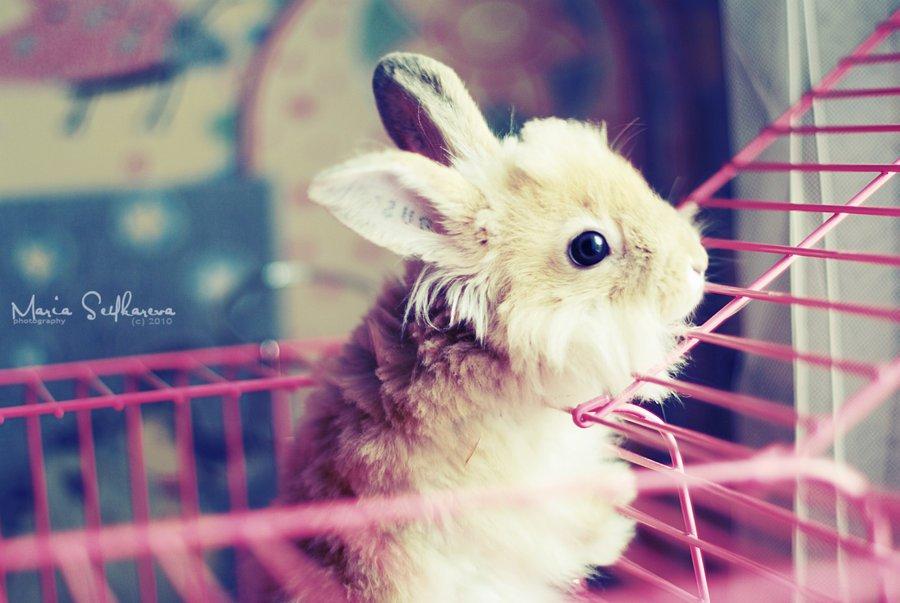 Hd Wallpaper Sad Boy And Girl Cute Rabbits Pics صور أرانب حلوة Daily Photos