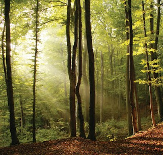 Forest planted and managed for carbon offsetting