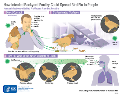 https://www.cdc.gov/flu/pdf/avianflu/avian-flu-transmission.pdf