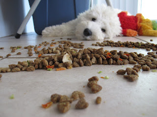 The Best Food Nutrition For Your Dog
