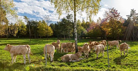 Fazenda de Alexandre Polmard