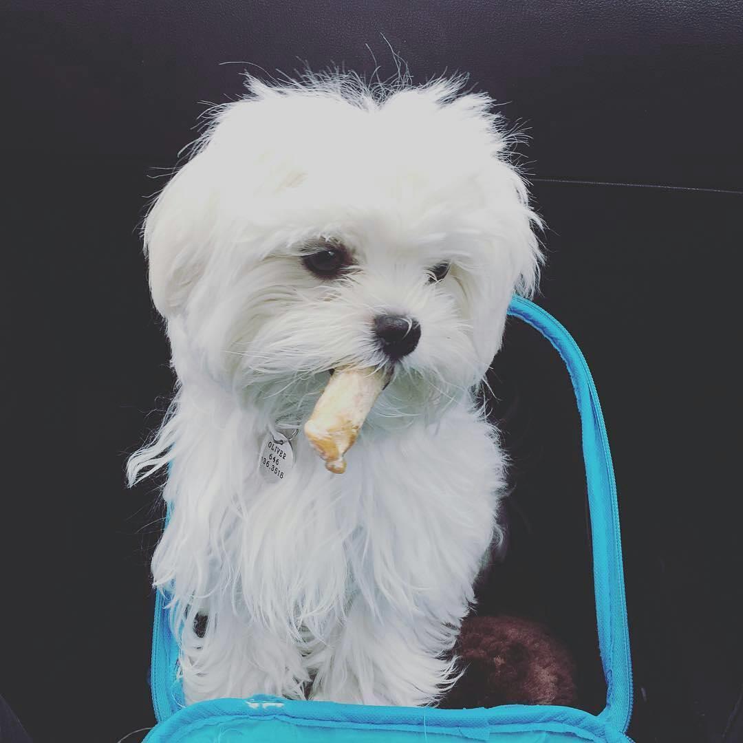 El lenguaje canino y como interpretarlo - Mascotas Foyel