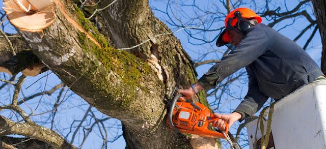Tree-removal-company-perth