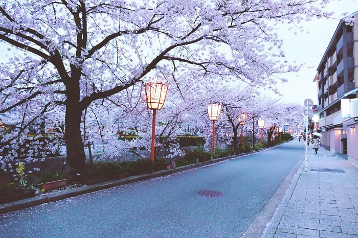 Cherry Blossom 2018 – When & Where to Visit