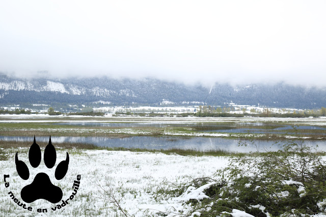lac-cerknica-neige-slovenie