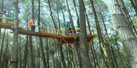Akses / Lokasi Wisata Hutan Pinus Pengger