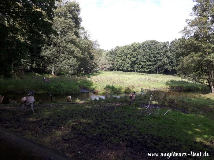 Wild im Wildpark Eekholt in Großenaspe
