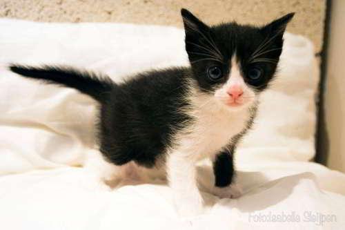 gatitos en adopcion 5