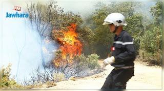 """بنزرت الجنوبية: حريق يأتي على أكثر من 2000 """"بالة قرط"""" في منطقة لواتة"""