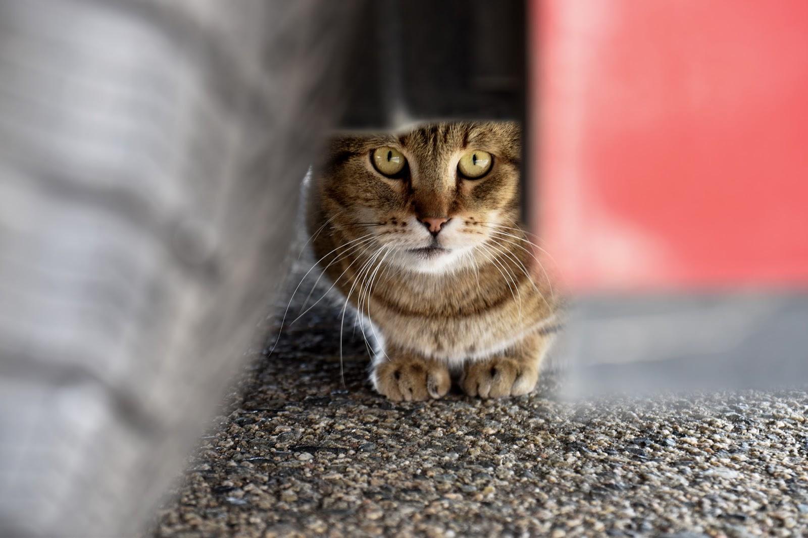 toulavá kočka pod autem