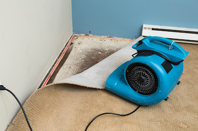 ways to prevent mold