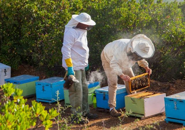 Αποτέλεσμα εικόνας για συρρίκνωση παρατηρείται φέτος στην παραγωγή μελιού»