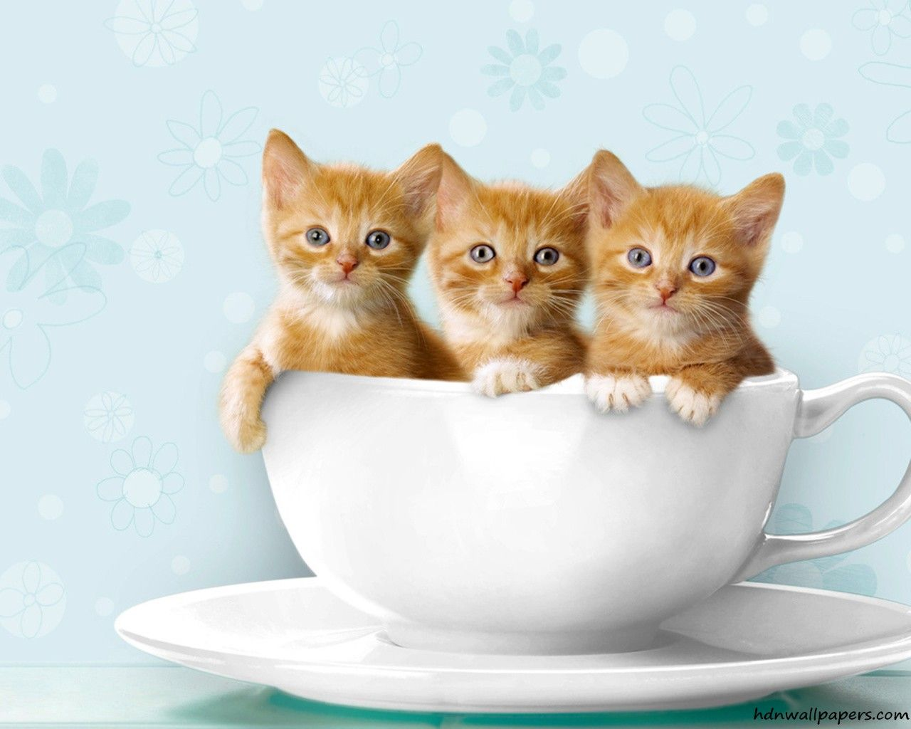 Kittens wallpaper ·① Download free stunning full HD wallpapers for