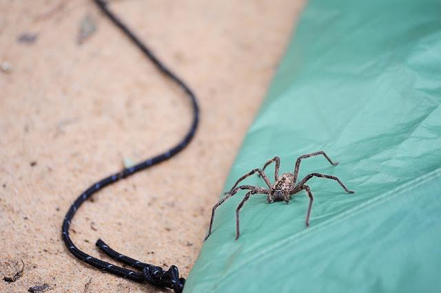 pajk, južna afrika