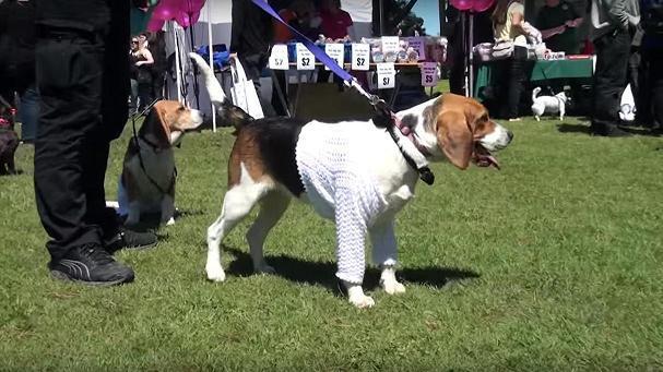 Frankston-Pets-Day-Out-2015