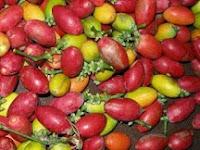 Kulit Mlinjo, Kandungan Nutrisi dan Manfaatnya Bagi Kesehatan
