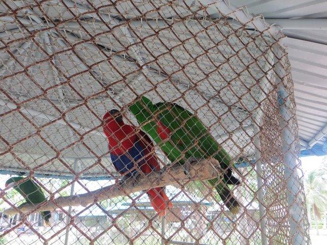 красный и зеленый попугай