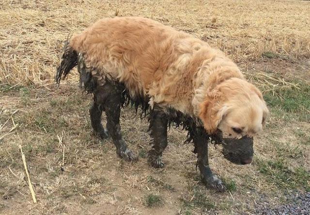 16 chú chó không dùng bột giặt nhưng cũng chẳng ngại gì vết bẩn