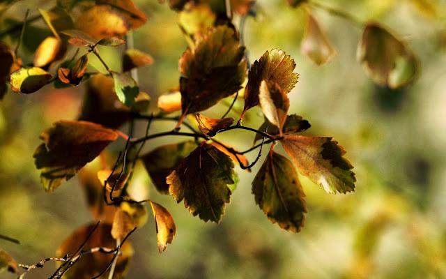 Foto met bladeren aan e bomen