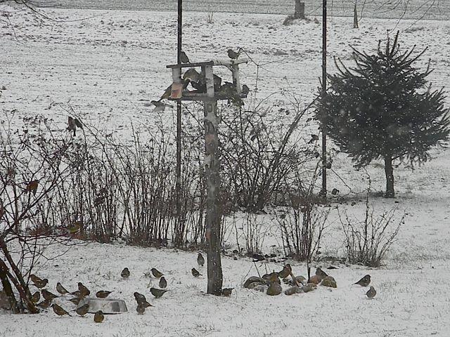 zima, karmnik, śnieg, słonecznik