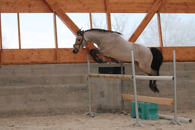 Trening po przerwie, czyli jak zacząć nie przeciążając konia?
