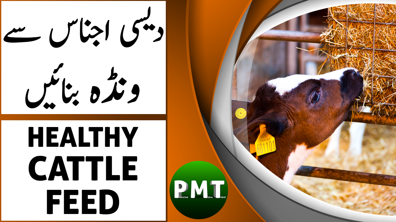 How to Make Healthy Cattle Feed Nutrition in Urdu Hindi in