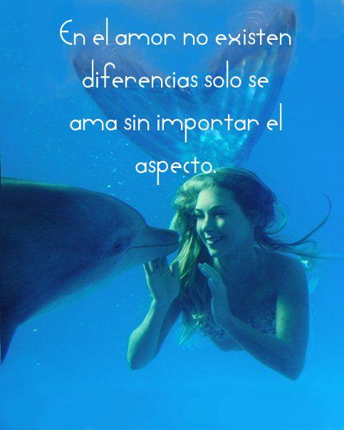 Gifs Animados Imagenes De Delfines Con Frases De Amor