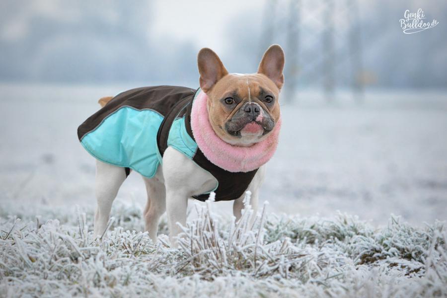 Hundemantel passend für Französische Bulldogge von Felix Bühler