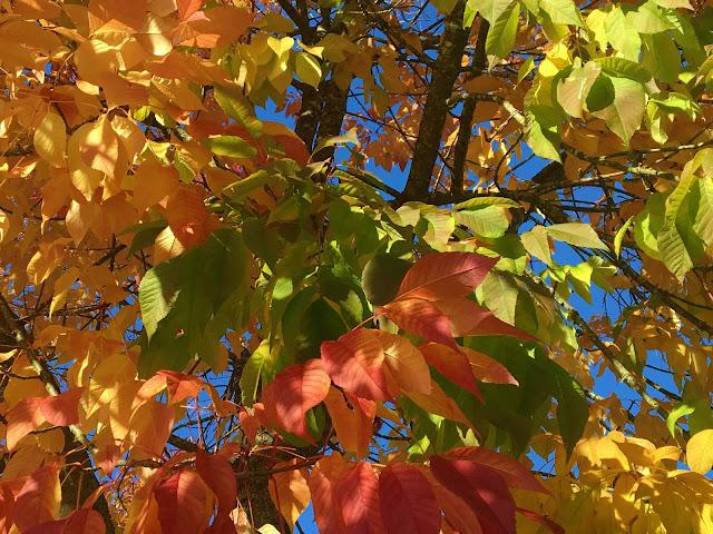 My Sentimental Jamboree - Fall is Back - Photo Friday