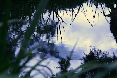 Nature walk in Royal Botanical Garden - Reflection :: All Pretty Things