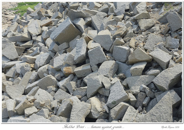 Halibut Point: ... humans against granite...