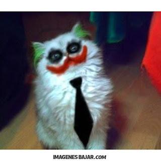 Imágenes Chistosas De Gatos Graciosas